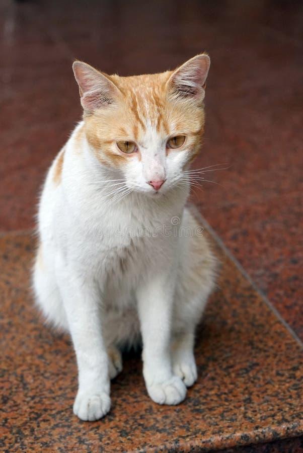 Πρόσωπο μιας γάτας στοκ φωτογραφία με δικαίωμα ελεύθερης χρήσης