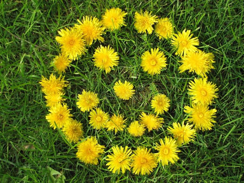 Πρόσωπο χαμόγελου που γίνεται με τις κίτρινες πικραλίδες την άνοιξη στοκ φωτογραφίες