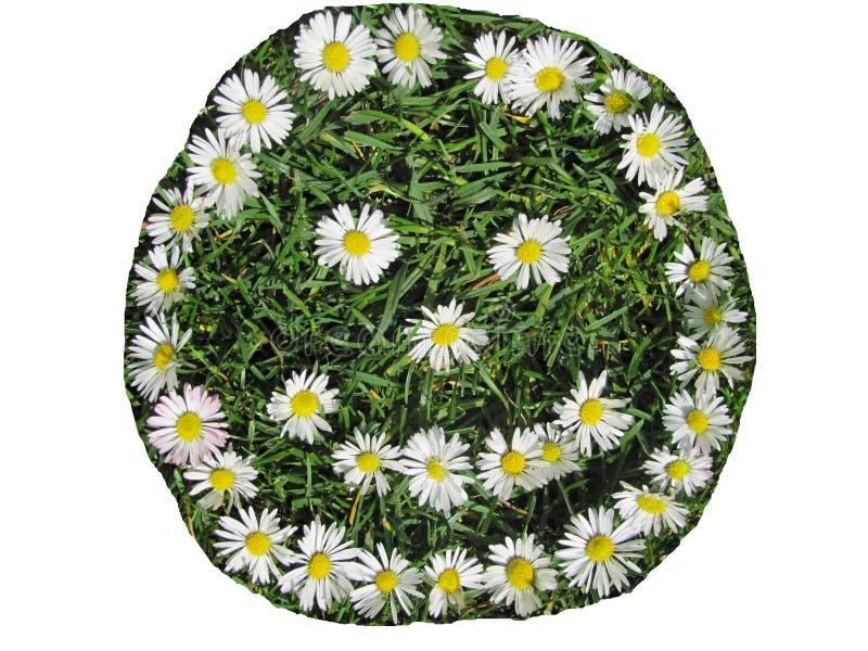 Πρόσωπο χαμόγελου που δημιουργείται από τα άσπρα λουλούδια που απομονώνονται στο άσπρο υπόβαθρο στοκ φωτογραφία