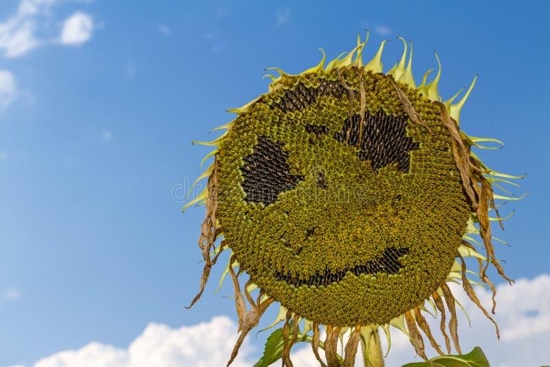 Πρόσωπο χαμόγελου του ηλίανθου στο θερινό χρόνο στοκ εικόνα