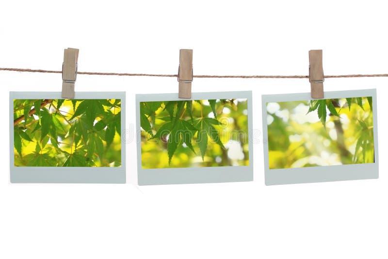 πρότυπα polaroid πράσινων φυτών απεικόνιση αποθεμάτων