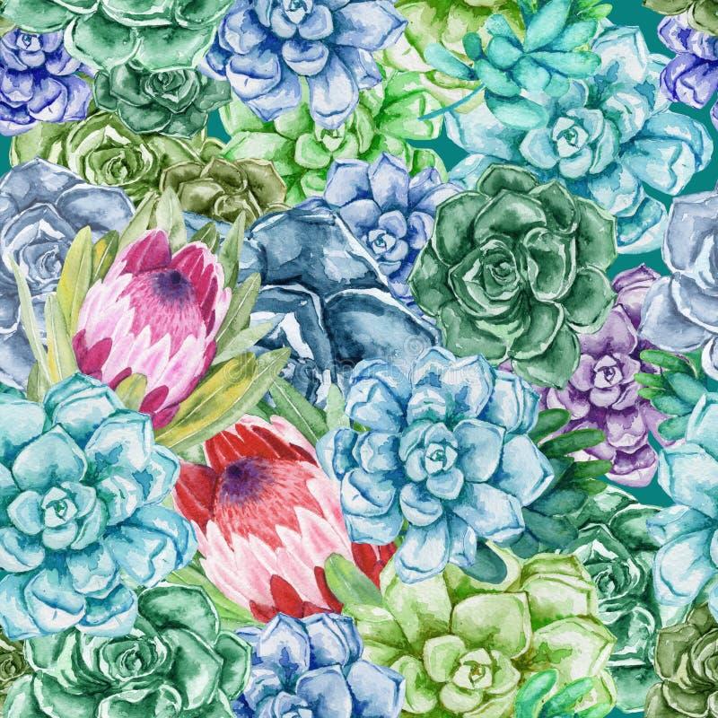 πρότυπο άνευ ραφής Watercolor succulents με τα λουλούδια protea Κάκτοι χρώματος διανυσματική απεικόνιση