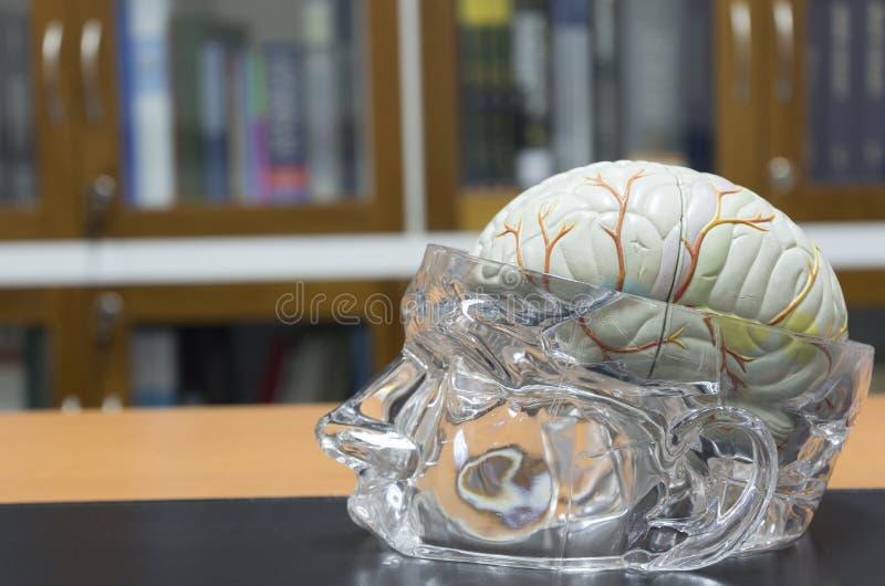 Πρότυπο εγκεφάλου στον πίνακα στοκ εικόνες