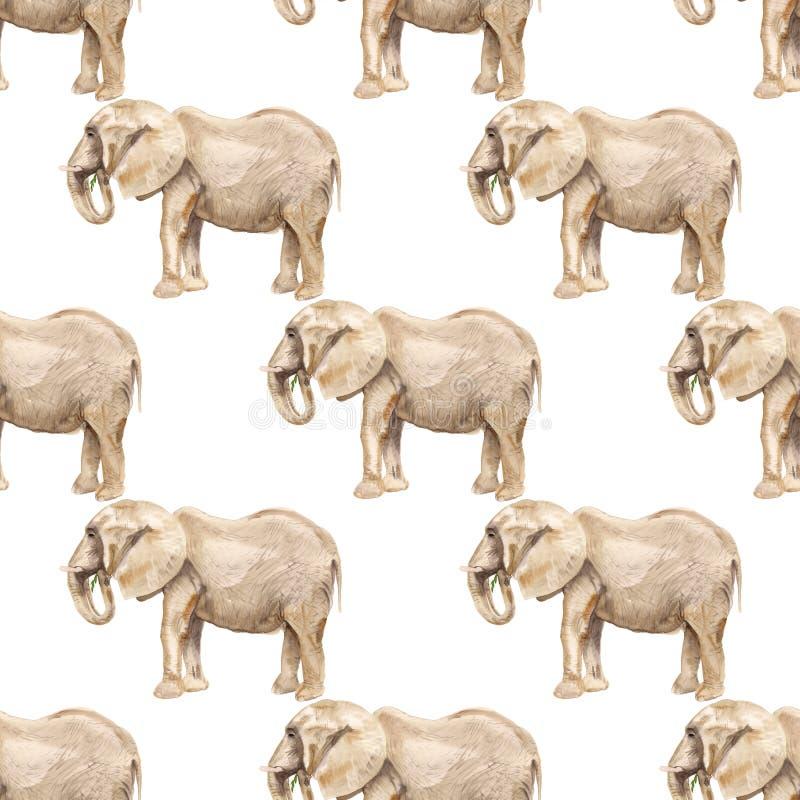 πρότυπο ελεφάντων άνευ ραφής απεικόνιση αποθεμάτων