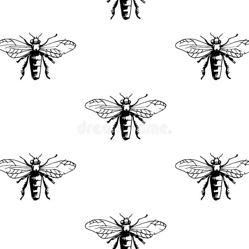 πρότυπο μελισσών άνευ ραφή&si απεικόνιση αποθεμάτων
