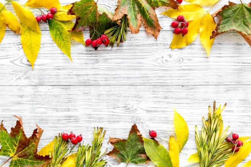 Πρότυπο με τα φωτεινά φύλλα και τα μούρα φθινοπώρου Κίτρινα και πράσινα φύλλα, κόκκινα μούρα στην άσπρη ξύλινη τοπ άποψη υποβάθρο στοκ φωτογραφίες
