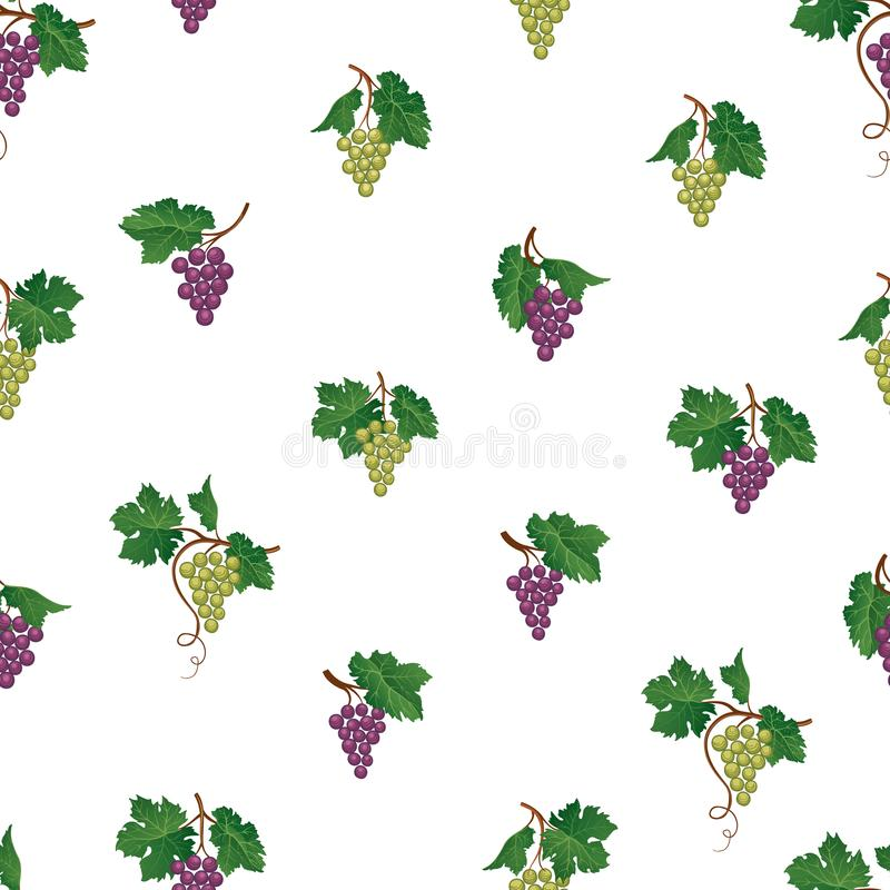 πρότυπο σταφυλιών άνευ ρα&ph Φυσική διακόσμηση φρούτων ναυπηγείων κρασιού Τρόφιμα β απεικόνιση αποθεμάτων