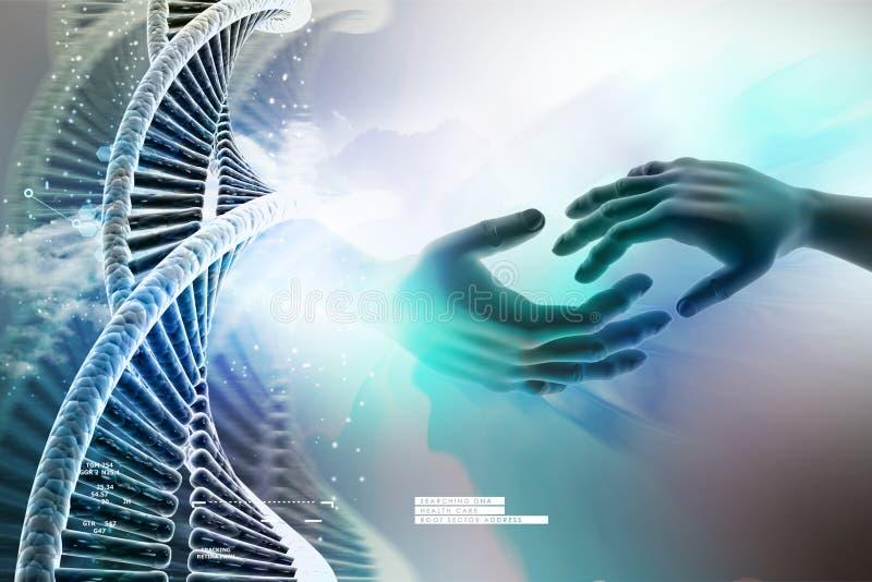 Πρότυπο της στριμμένης αλυσίδας και του χεριού DNA χρωμίου απεικόνιση αποθεμάτων