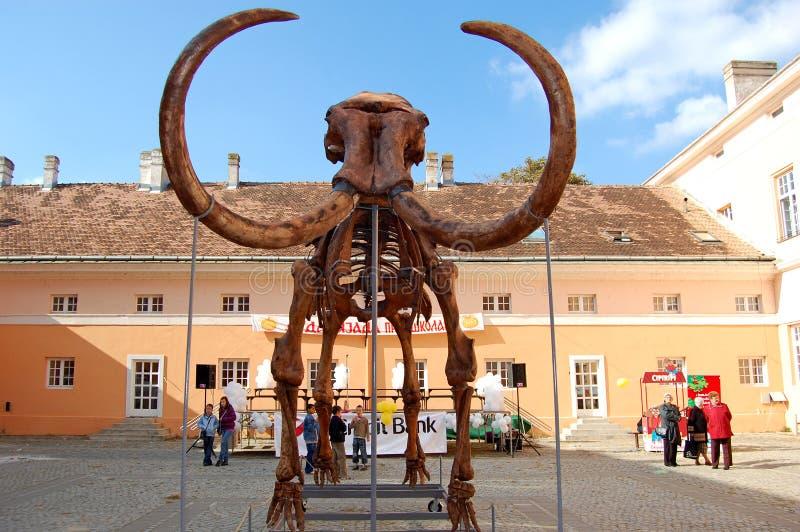 Πρότυπο του μαμμούθ σκελετού στοκ εικόνα
