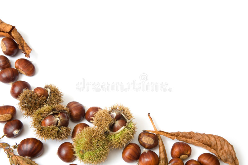 πρότυπο φθινοπώρου στοκ φωτογραφία με δικαίωμα ελεύθερης χρήσης