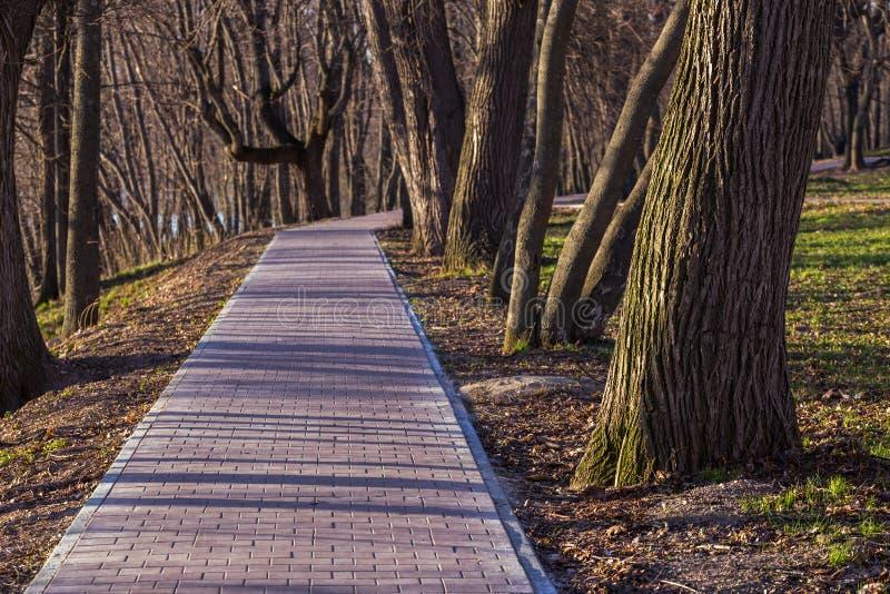 Πρόωρη διάβαση άνοιξη στο πάρκο στοκ φωτογραφία με δικαίωμα ελεύθερης χρήσης