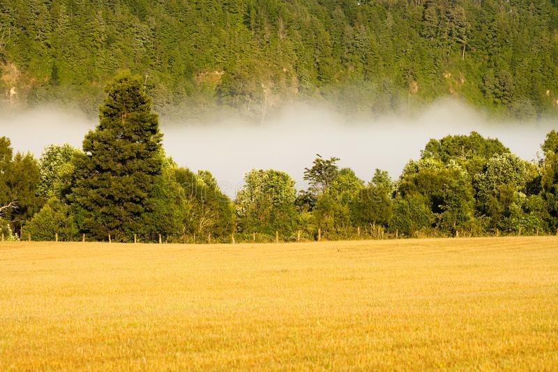 Πρόωρη ομίχλη στο λιβάδι, Villarrica, Χιλή στοκ εικόνες