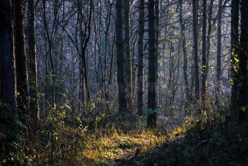 Πρόωρο δάσος ανοίξεων στον ήλιο πρωινού στοκ φωτογραφία με δικαίωμα ελεύθερης χρήσης