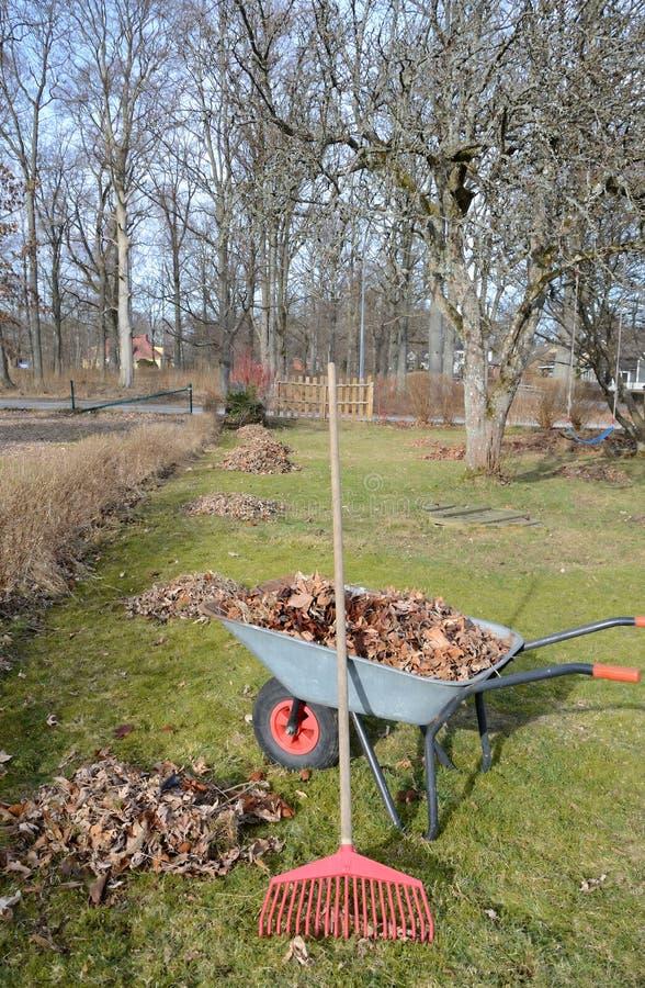 πρώιμη βασική άνοιξη κήπων στοκ φωτογραφία με δικαίωμα ελεύθερης χρήσης