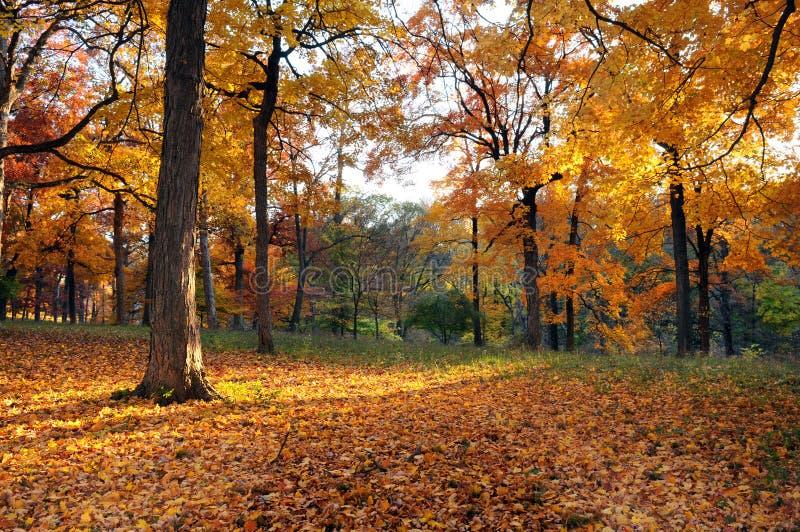 πρώιμο δάσος πτώσης στοκ εικόνες με δικαίωμα ελεύθερης χρήσης
