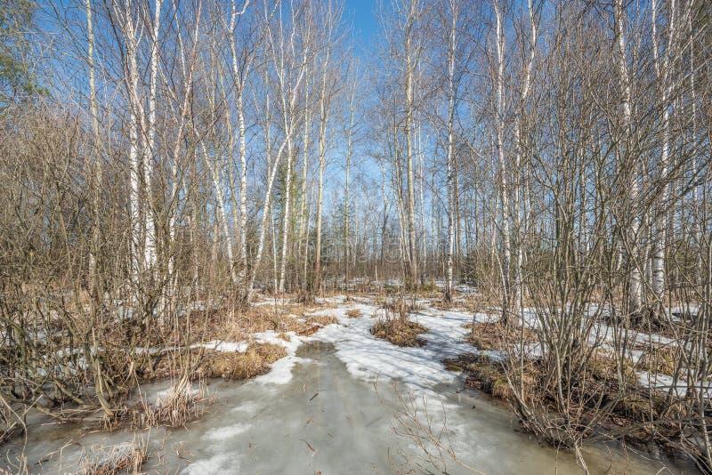 Πρώιμο ελατήριο στο δάσος στοκ φωτογραφίες με δικαίωμα ελεύθερης χρήσης