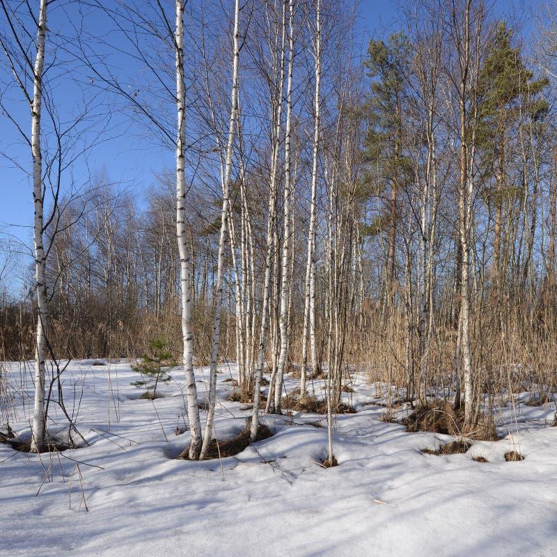 Πρώιμο ελατήριο στο δάσος στοκ φωτογραφίες