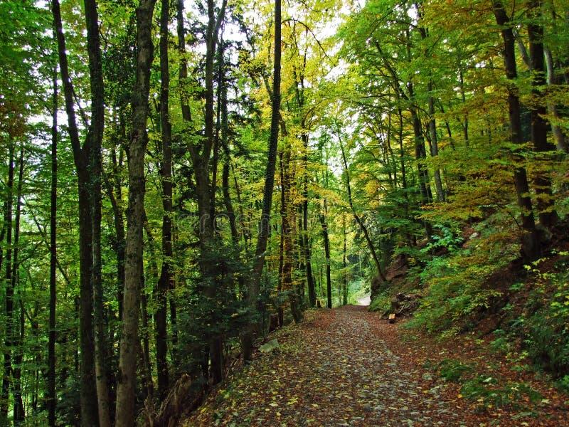 Πρώιμο φθινόπωρο στα αποβαλλόμενα δάση στις κλίσεις της σειράς βουνών Alpstein και στην κοιλάδα του Ρήνου στοκ εικόνα
