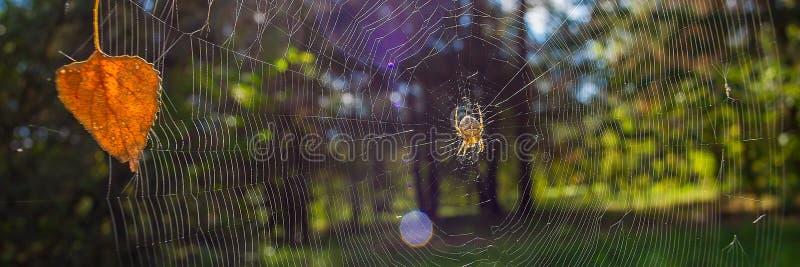 Πρώιμο φθινόπωρο στην αράχνη και τον ιστό αράχνης αποβαλλόμενων δασών την ηλιόλουστη ημέρα o στοκ φωτογραφίες