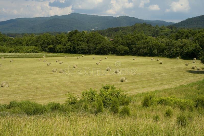 πρώιμο hayfield καλοκαίρι στοκ εικόνες