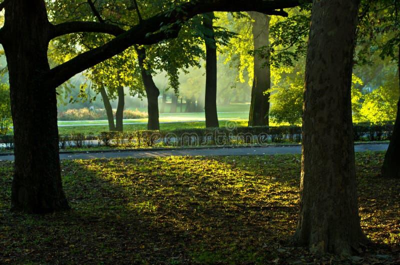 Πρώτα sunrays στο πρωί στο πάρκο Topcider, Βελιγράδι στοκ εικόνες