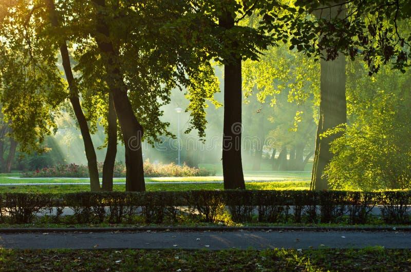 Πρώτα sunrays στο πρωί φθινοπώρου στο πάρκο Topcider στοκ εικόνα με δικαίωμα ελεύθερης χρήσης