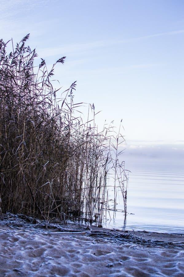 Πρώτος παγετός στην παραλία στοκ φωτογραφία με δικαίωμα ελεύθερης χρήσης