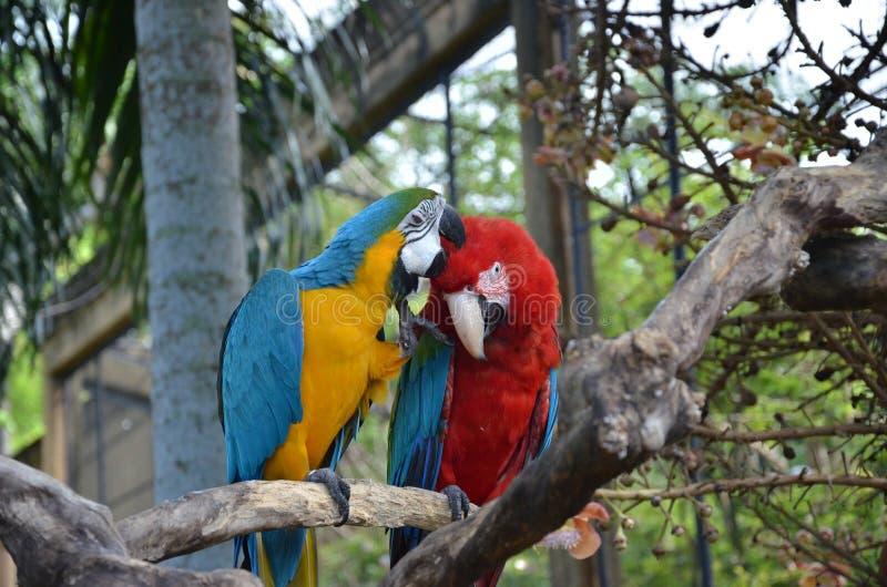 πρώτο φιλί στοκ εικόνες με δικαίωμα ελεύθερης χρήσης