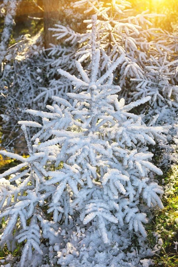 πρώτο χιόνι βουνών στοκ εικόνες με δικαίωμα ελεύθερης χρήσης