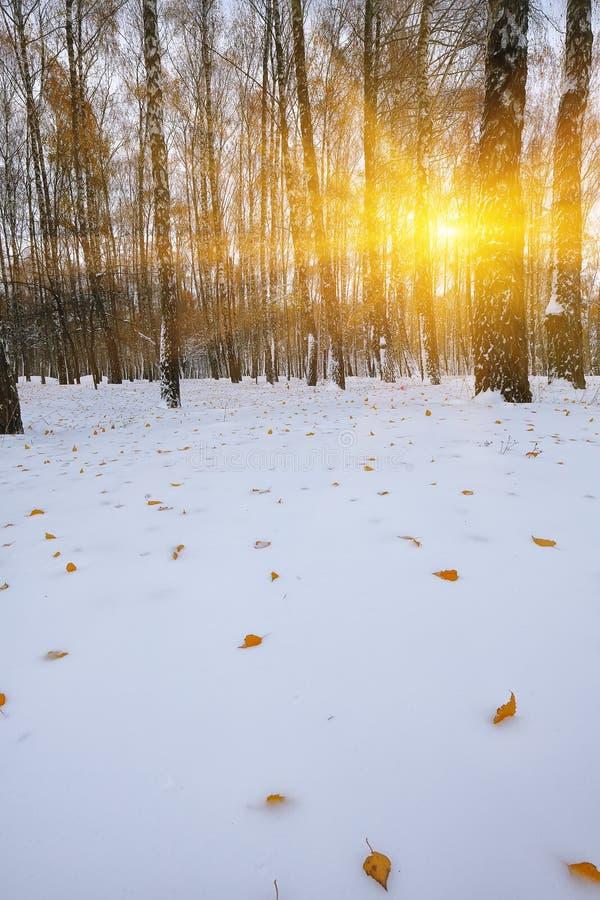 Πρώτο χιόνι στα δασικά χιονισμένα δέντρα στο ξύλο στοκ εικόνες με δικαίωμα ελεύθερης χρήσης