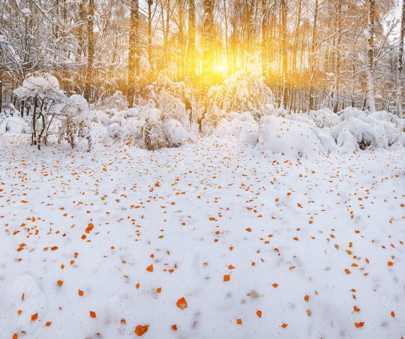 Πρώτο χιόνι στα δασικά χιονισμένα δέντρα στο ξύλο στοκ εικόνες