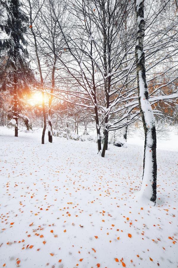 Πρώτο χιόνι στα δασικά χιονισμένα δέντρα στο ξύλο στοκ εικόνα με δικαίωμα ελεύθερης χρήσης