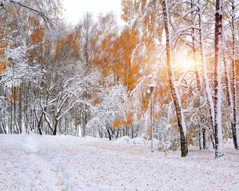 Πρώτο χιόνι στα δασικά χιονισμένα δέντρα στο ξύλο στοκ φωτογραφίες με δικαίωμα ελεύθερης χρήσης