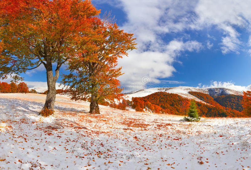 Πρώτο χιόνι στο δάσος στα βουνά Ηλιόλουστη ημέρα Νοεμβρίου στοκ φωτογραφία με δικαίωμα ελεύθερης χρήσης