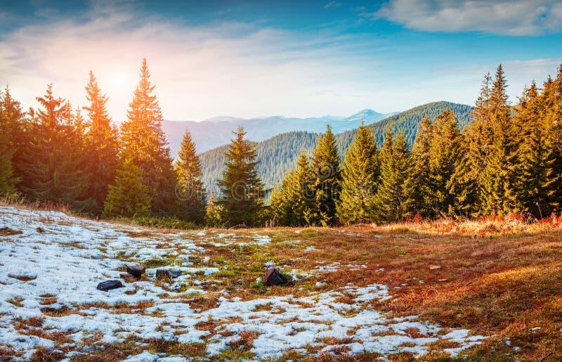 Πρώτο χιόνι στο Καρπάθιο δάσος βουνών στοκ εικόνα με δικαίωμα ελεύθερης χρήσης