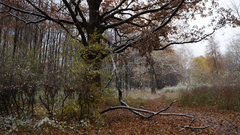 πρώτο χιόνι στοκ φωτογραφίες με δικαίωμα ελεύθερης χρήσης
