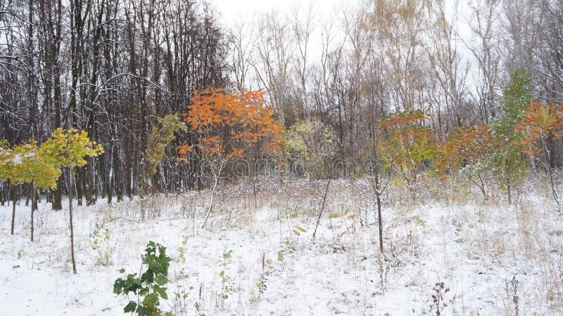 πρώτο χιόνι στοκ εικόνες με δικαίωμα ελεύθερης χρήσης
