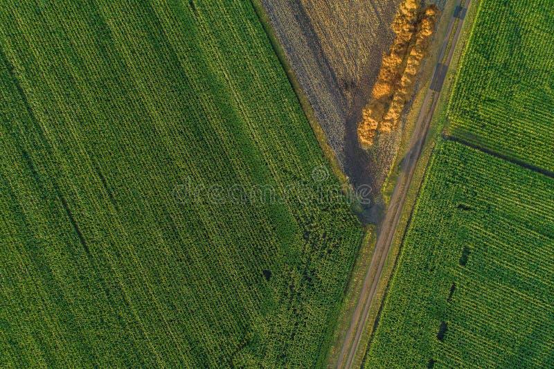 Πτήση κηφήνων και εναέρια άποψη πέρα από έναν τομέα καλαμποκιού στοκ εικόνες