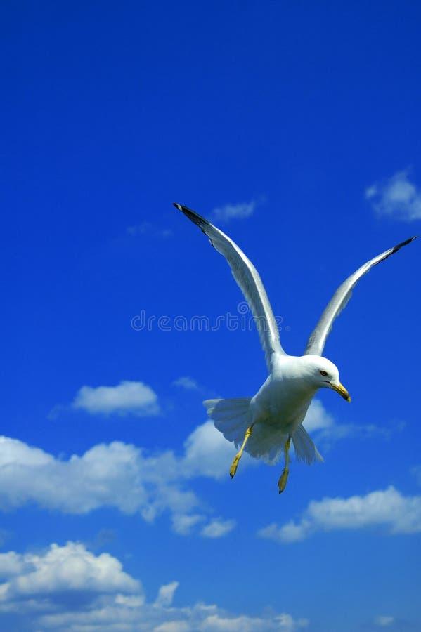πτήση λοξοδρόμησης στοκ εικόνα με δικαίωμα ελεύθερης χρήσης