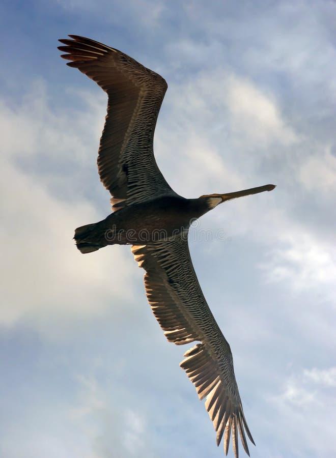 Download πτήση πουλιών στοκ εικόνες. εικόνα από ανασκόπησης, έκταση - 104100