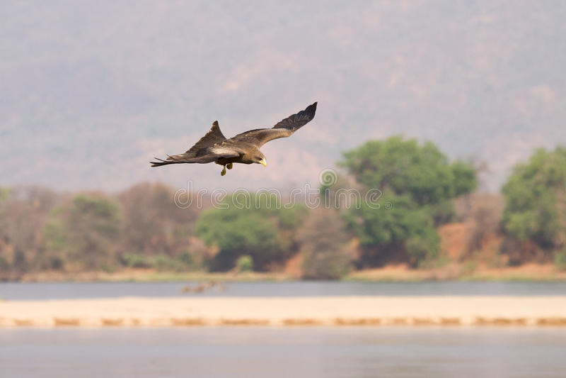 πτήση πουλιών στοκ φωτογραφία με δικαίωμα ελεύθερης χρήσης