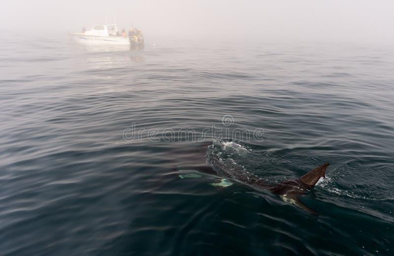 Πτερύγιο καρχαριών ανωτέρω - νερό στοκ εικόνες