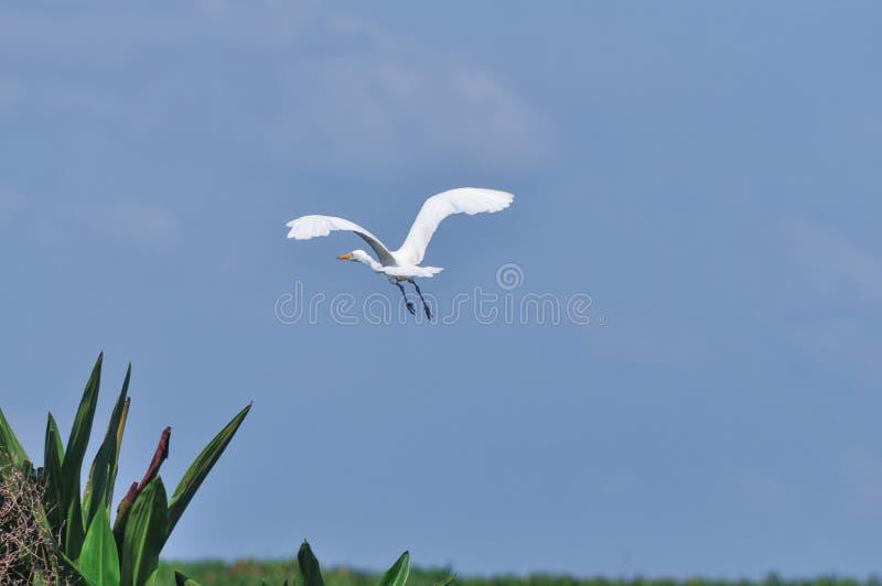 Πτηνά νερού στοκ εικόνες με δικαίωμα ελεύθερης χρήσης
