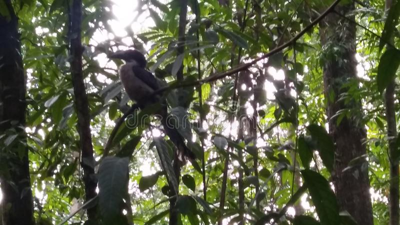 Πτηνά στο δάσος της Σρι Λάνκα στοκ φωτογραφία