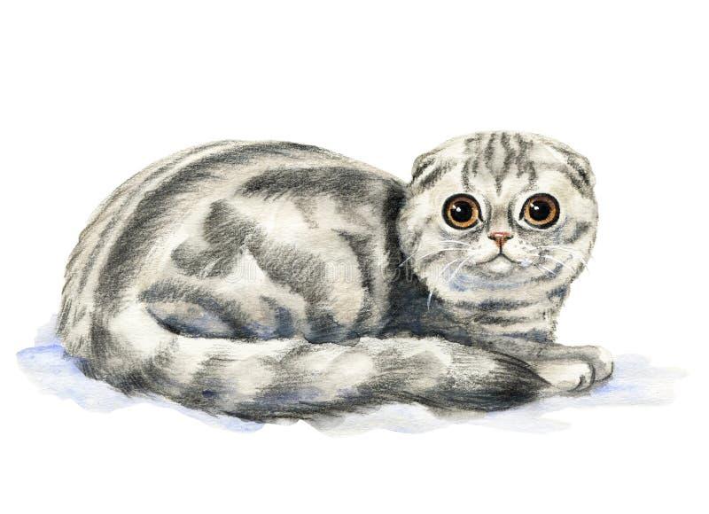 πτυχές σκωτσέζικα γατών σφαιρών διανυσματική απεικόνιση