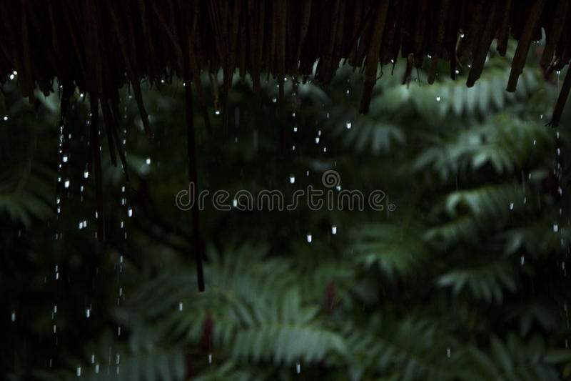 Πτώσεις βροχής που μειώνονται κάτω από από τη στέγη μπαμπού στοκ φωτογραφία με δικαίωμα ελεύθερης χρήσης
