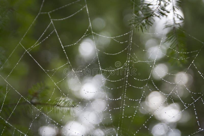 Πτώσεις βροχής στον Ιστό αραχνών στοκ εικόνα με δικαίωμα ελεύθερης χρήσης