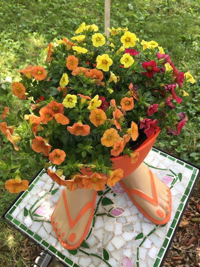 Πτώσεις και λουλούδια κτυπήματος στοκ εικόνες με δικαίωμα ελεύθερης χρήσης