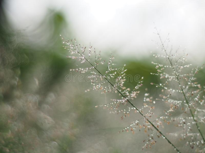 Πτώσεις νερού στην ηλιοφάνεια χλόης και bokeh στη περίοδο βροχών με την προσαρμογή σε μια μικρή θαμπάδα στη φαντασία ή το όνειρο στοκ εικόνες