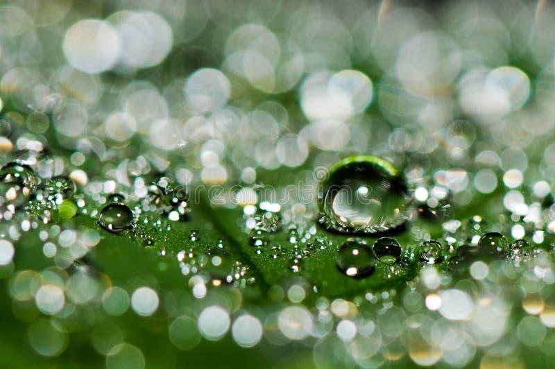 Πτώσεις νερού στο φύλλο φοινικών στοκ εικόνα με δικαίωμα ελεύθερης χρήσης